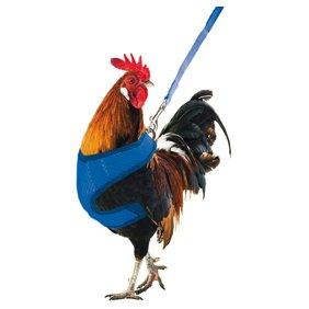 Gilet et harnais pour poules