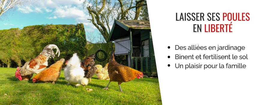 Avoir des poules au jardin