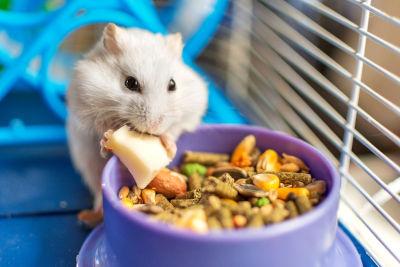 Nourrir son rongeur : lapin, hamster